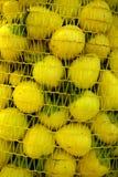 新鲜的辣椒绿色辣椒粉在开放的市场上 库存照片