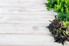 新鲜的辣草本,莳萝,蓬蒿,荷兰芹,薄菏 免版税库存照片