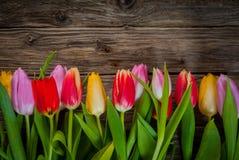 新鲜的郁金香五颜六色的花卉边界  免版税库存照片