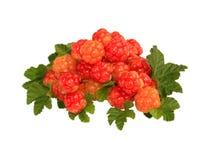 新鲜的野草莓 免版税图库摄影