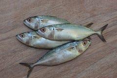新鲜的金枪鱼准备好烹调 图库摄影