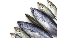 新鲜的金枪鱼和黄色在wh隔绝的trevally条纹鱼 免版税图库摄影