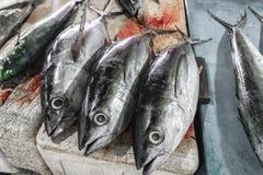 新鲜的金枪鱼在Jimbaran在巴厘岛的鱼市上 免版税图库摄影