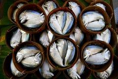 新鲜的金枪鱼 库存图片
