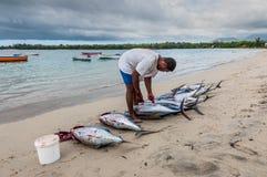 新鲜的金枪鱼 免版税库存照片