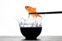 新鲜的金鱼寿司 图库摄影
