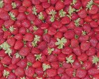 新鲜的销售额草莓 库存图片