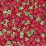 新鲜的销售额草莓 免版税库存图片