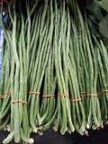 新鲜的长的豆 免版税库存图片