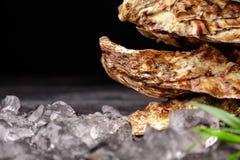 新鲜的闭合的牡蛎的宏观图片在黑背景的 可口热带海软体动物 消耗大的食物 复制空间 库存图片