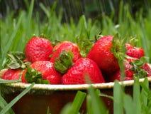 新鲜的雨草莓 免版税库存照片