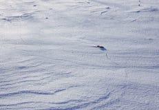 新鲜的雪在晴朗的冬日 库存照片