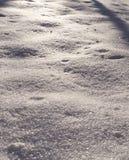 新鲜的雪在晴朗的早晨在森林背景中,季节性 图库摄影