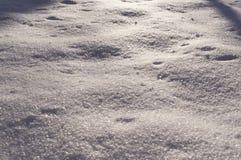 新鲜的雪在晴朗的早晨在森林背景中,季节性 库存照片