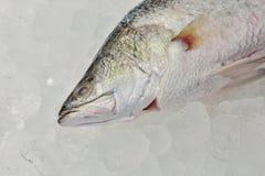 新鲜的雪鱼 免版税库存图片