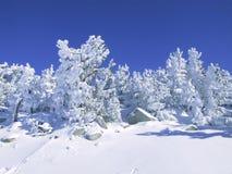新鲜的雪 库存照片
