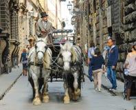 新鲜的马车夫在马拉扯的支架乘坐在佛罗伦萨 免版税库存图片
