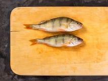 新鲜的鱼 新鲜的河鱼栖息处 在一黄色木backgroun 免版税图库摄影