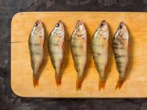 新鲜的鱼 新鲜的河鱼栖息处 在一黄色木backgroun 库存照片