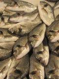 新鲜的鱼 免版税库存图片