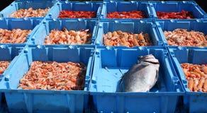 新鲜的鱼 库存图片