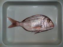 新鲜的鱼 图库摄影