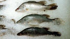 新鲜的鱼 库存照片