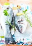 新鲜的鲈鱼用草本 库存图片
