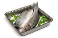 新鲜的鲈鱼 免版税库存图片