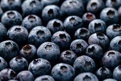 新鲜的鲜美蓝莓莓果宏观特写镜头  夏天食物 食物 免版税库存照片