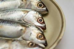 新鲜的鲭鱼被隔绝的盘  免版税库存图片
