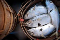 新鲜的鲭鱼鱼篮子  库存图片