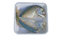 新鲜的鲭鱼 免版税库存图片