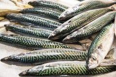 新鲜的鲭鱼 免版税图库摄影