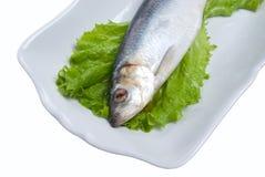 新鲜的鲱鱼 库存照片