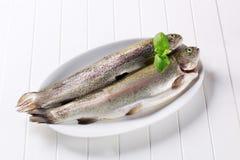 新鲜的鳟鱼二 免版税图库摄影