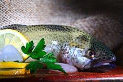 新鲜的鳟鱼土气样式餐馆 免版税库存照片
