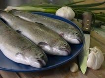 新鲜的鳟鱼 免版税库存照片