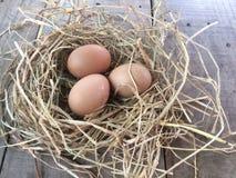 新鲜的鸡在木桌上的巢怂恿 图库摄影