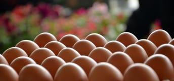 新鲜的鸡蛋在市场上 库存照片