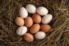 新鲜的鸡蛋顶视图白色和棕色在秸杆 库存图片