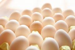 新鲜的鸡蛋 库存图片