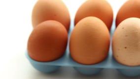 新鲜的鸡蛋 影视素材