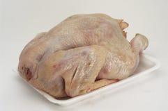 新鲜的鸡 免版税库存照片