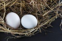 新鲜的鸭子鸡蛋 库存照片