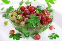 新鲜的鹅莓 库存图片