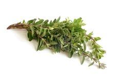 新鲜的麝香草枝杈 图库摄影
