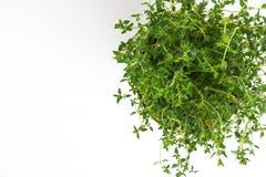 新鲜的麝香草草本在花瓶增长 免版税库存图片
