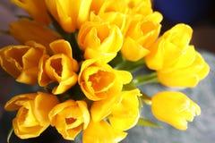 新鲜的黄色郁金香花束在花瓶的 库存图片