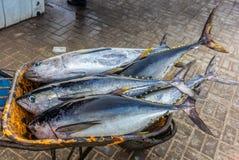 新鲜的黄色飞翅金枪鱼抓住在鱼市上在马斯喀特- 1 免版税图库摄影